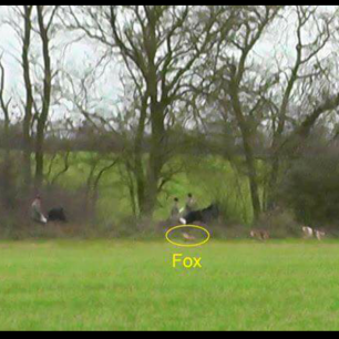 hunt-chasing-fox-7776