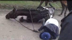 hunt-horse-fallen-over