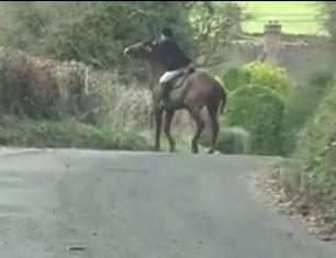 hunt-rider-attacks-horse