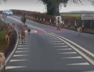 hunts-on-roads-6662