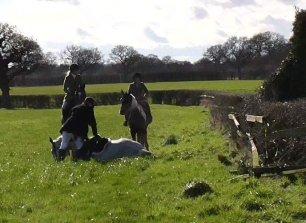 injured-hunt-horse-55666