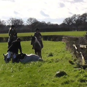 injured-hunt-horse-55666