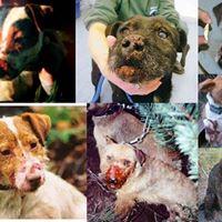 injured-terrier-356723