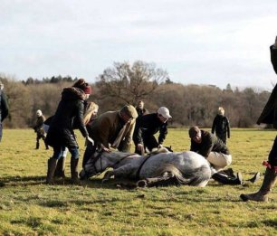 injuried-hunt-horse