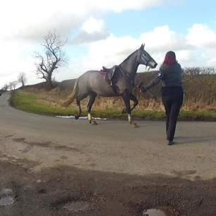 loose-hunt-horse-560784