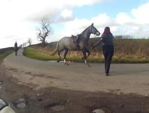 loose-hunt-horse-on-road-77823