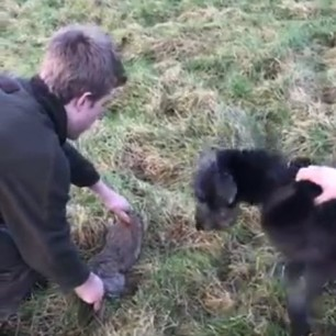 rabbit-being-thrown-to-dogs