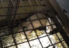 reared-fox-14445