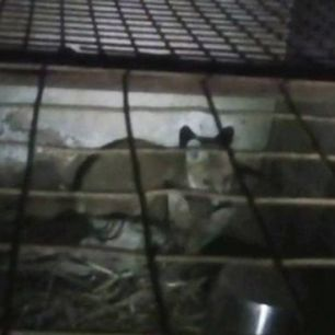 reared-fox-3362