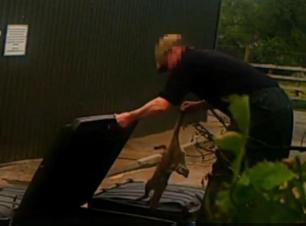 rearing-fox-cub-in-bin