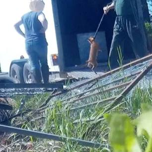rearing-fox-cubs-7726