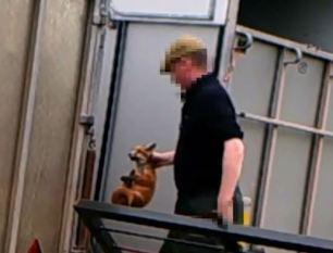 rearing-fox-cubs-882763