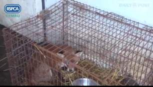 rearing-foxes-882345