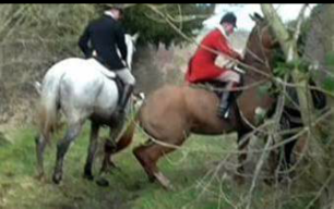 rider-ramming-horse-into-monitor-277745