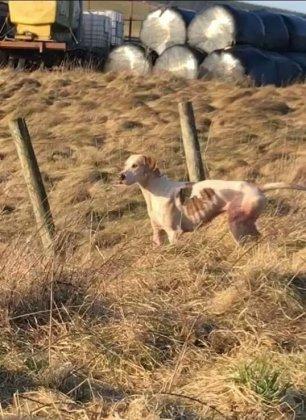 skinny-hound-3372