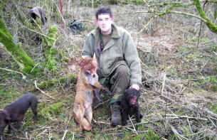 terrier-and-dead-fox