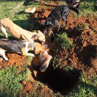 terrier-dogs-9927364