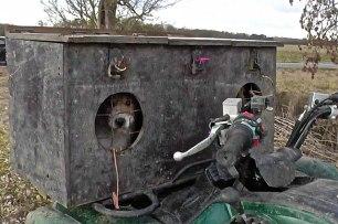 terrier-in-box-229456