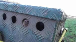 terrier-in-box-348564
