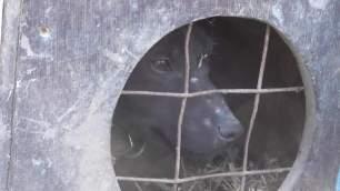 terrier-in-box-8336753