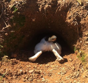 terrier-in-hole