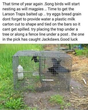 trap-213232