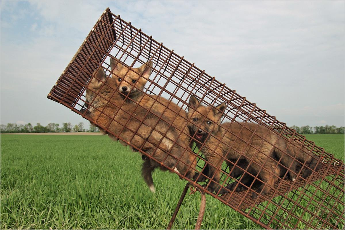 ирины развелись, фото ловушки на животных дружбе