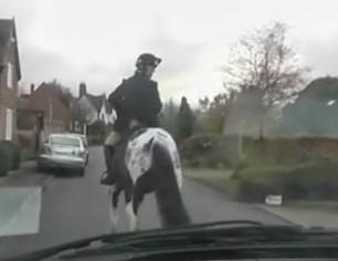warwichshire-hunt-love-their-horses