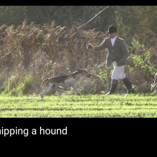 whipping-hound-112342