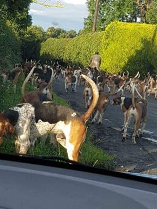 hounds-on-road-77111