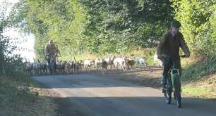 hounds-on-roads-777343