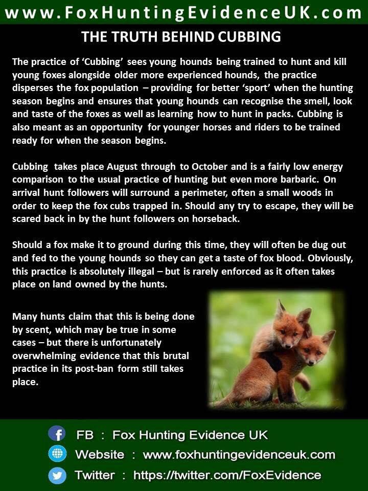 poster-cub-hunting-sian