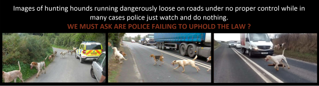 hounds-loose-on-roads-image-header