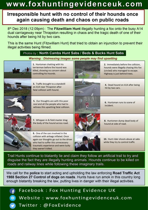 Fitzwilliam hound killed on road