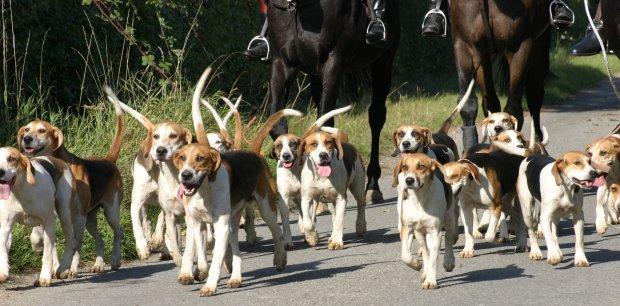 hounds banner 008