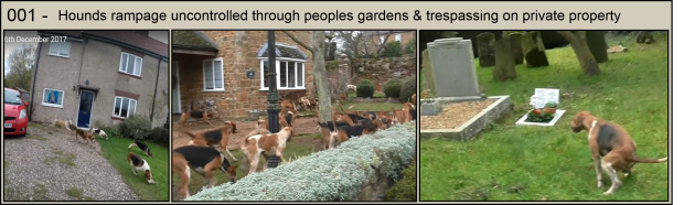 Hounds in peoples gardens 001