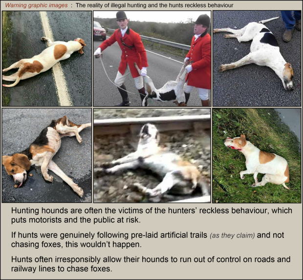 Hounds killed on roads 002