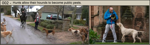 Hunts allow their hounds to become pests 002