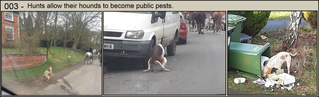 Hunts allow their hounds to become pests 003