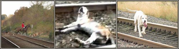 Hounds killed on railway 77383A