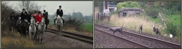 Hounds killed on railway 77383B