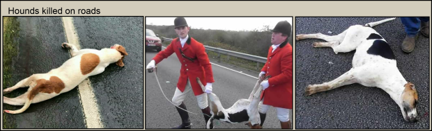 Hounds killed on roads 77382A