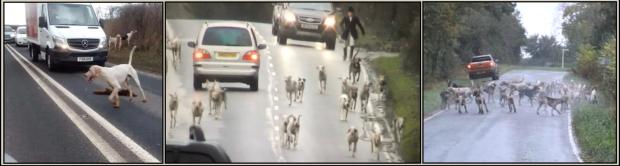 Hounds on roads - 008b