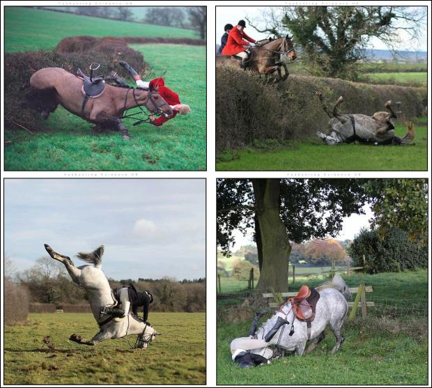 Hunt horses suffer tooB