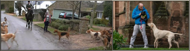 Hunts allow their hounds to become pests 002b