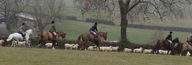 hunts-worrying-sheep-88673