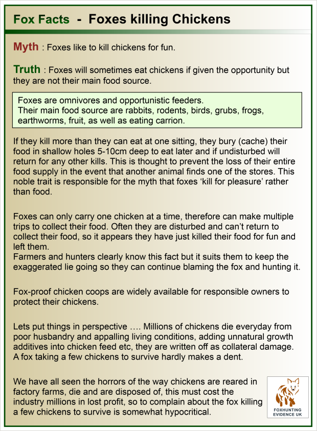 Facts - Foxes killing Chickens