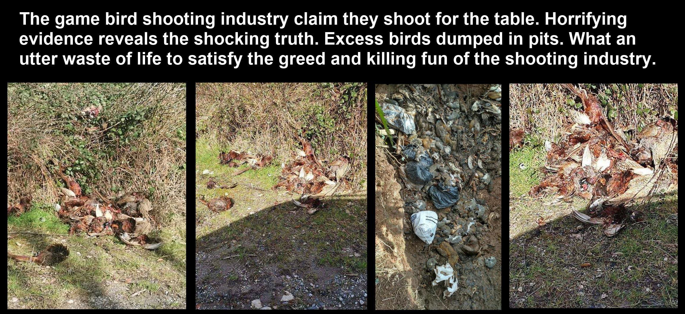 Dead game birds