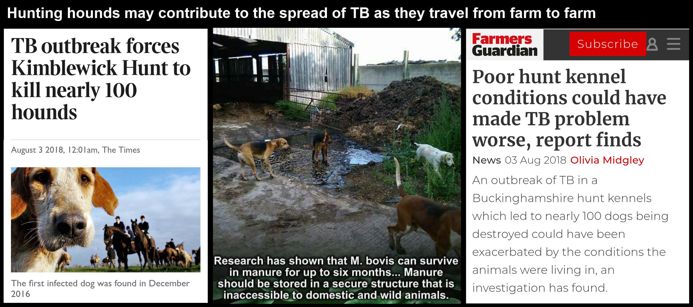 TB Hounds