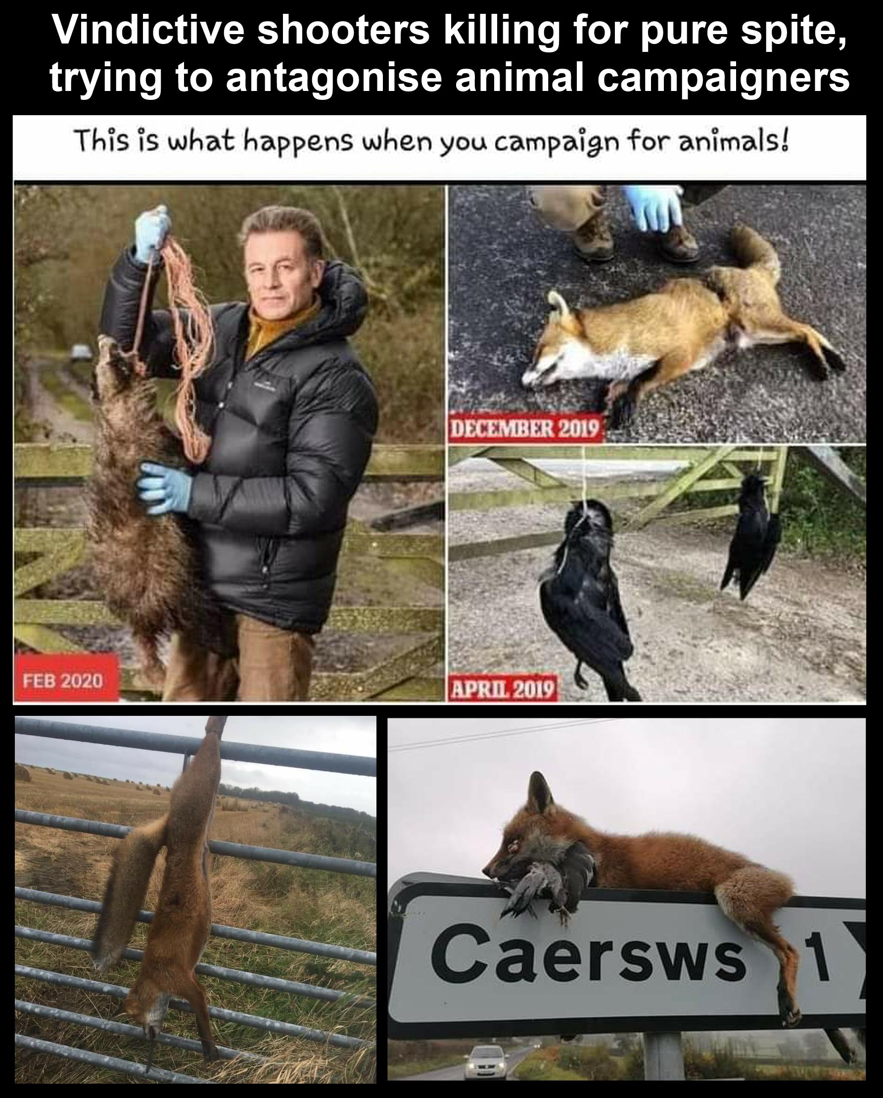 vindictive hunters